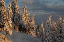 松之山の雪景色