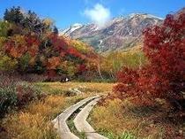 栂池自然園紅葉