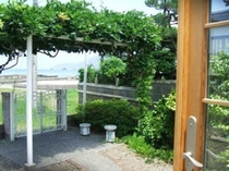 庭にある藤棚が涼しげ