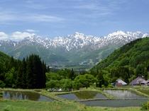 美しい棚田と五竜岳の残雪(青鬼地区)