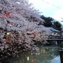 【城崎温泉】春には浴衣でお花見を、夏には浴衣で花火を楽しんで頂けます(一部除いた平日)