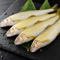 初夏は川の幸・川魚のお料理が美味しい季節。