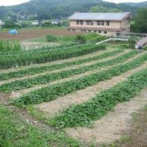 *施設一例/「美土里農園」では体に安心・安全なたい肥を使って、おいしい野菜を栽培しています。