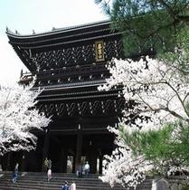 知恩院(桜)①
