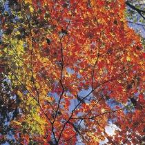 【宿周辺の風景】秋には紅葉がお楽しみいただけます