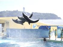 新江ノ島水族館イルカ・アシカショー「きずな/kizuna」