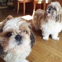 *看板犬のメロとチョロ。フロントでお出迎えしてくれますよ♪