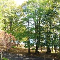 *和室からの眺め。緑がいっぱい!普段とは違った空間で心も身体も癒される♪