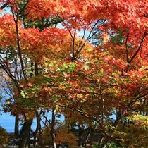 *秋になると、美しい紅葉を望むことができます。
