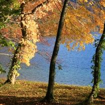 *色鮮やかな落ち葉のじゅうたんが広がります。