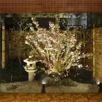 坪庭(八重桜)