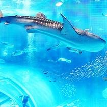 沖縄ちゅら海水族館
