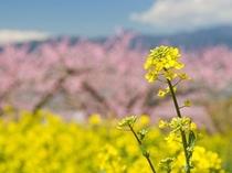 春旅写真イメージ