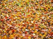 落ち葉の紅葉もきれいです☆