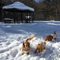 雪の中のドッグラン