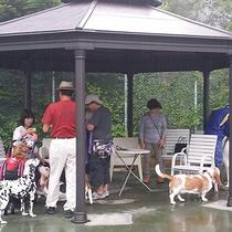 *ドッグランにある東屋。日差しや雨を凌ぐ休憩スペースです。