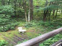 北軽井沢森の別荘二階から望むガーデン