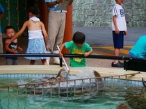 かめの餌付け風景。意外に迫力満点!イルカともたくさん遊べる人気の水族館