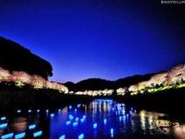 みなみの桜と菜の花祭りの夜桜イベント