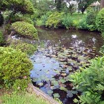 *庭園/池もある純和風の庭園。朝はのんびりお散歩してみてはいかがですか。