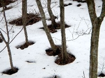 木まわり穴