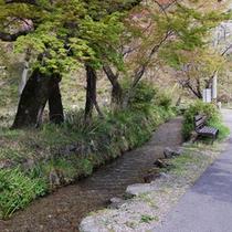 【宿前を流れる小川】初夏には蛍が見られます