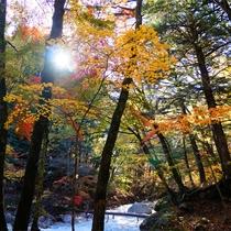 *紅葉/例年見頃10月下旬 本谷川と美しい紅葉 カメラをお忘れなく!