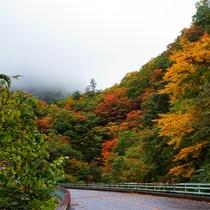 *紅葉/例年見頃10月下旬 当館までの道のりも、紅葉で色どられ、とても鮮やかになります。