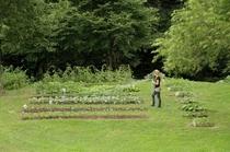 Organic vege garden