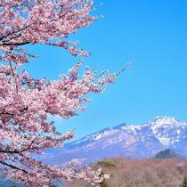 桜と日光連山