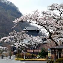 当館前の桜