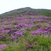*九重登山☆雄大な九重の美しい景色を五感で感じて下さい