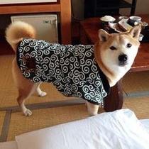 【お客様】やっぱり柴犬には唐草が良く似合う♪