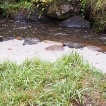 傍を流れる小川