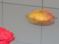貸切風呂 リンゴ