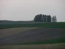 春の新栄の丘