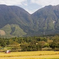 湯布院の田園風景