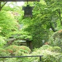 緑の豊富な園内