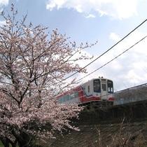 釜石の春_三陸鉄道と桜
