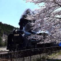 釜石の春_SL銀河と桜