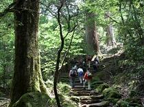 【周辺・観光】水上村「森林セラピー」