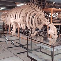 *ピリカ遺跡/当館より車で約2分、ピリカ海牛の展示などをご覧いただけます。