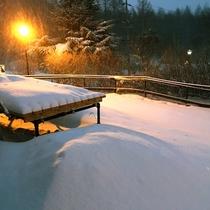 冬のドッグラン