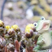 庭のカエル(帰る)と春の訪れ