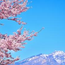麓の桜と日光連山