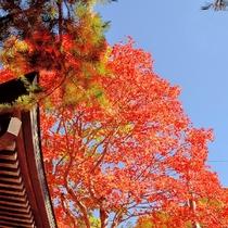 秋の紅葉、竜頭の滝