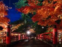 中野もみじ山『紅葉のライトアップ』NO1