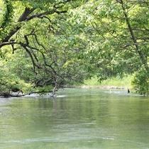 *春/瑞々しい新緑の森の中を、のんびりのんびりクルージング。