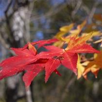 *秋/赤。橙、黄色。小さい秋を見つけに来ませんか?