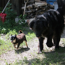 *施設の様子/アトレーユ敷地内には6匹の犬たちが仲良く暮らしています!